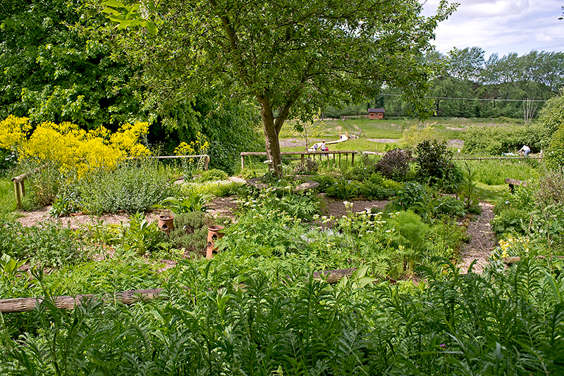 Herb Garden at Natural Surroundings