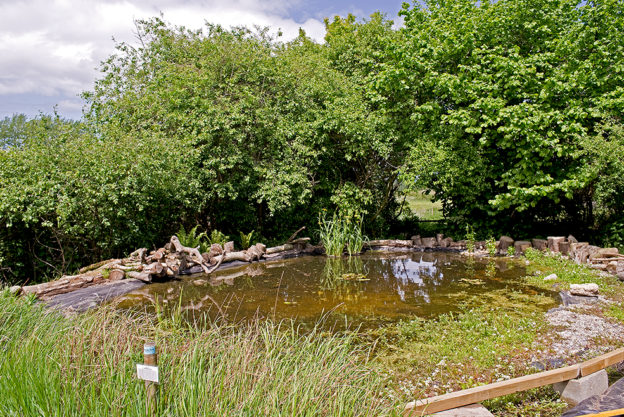 Wildlife pond at Natural Surroundings
