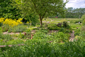 Herb Garden at Natural Surroundings