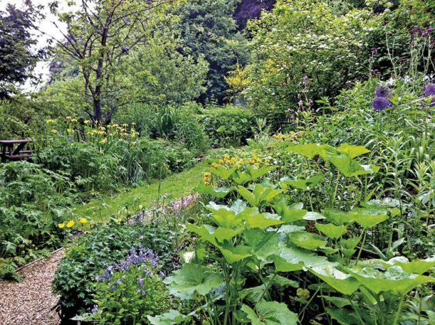 Wildlife garden at Natural Surroundings