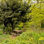 Yew tree and bench